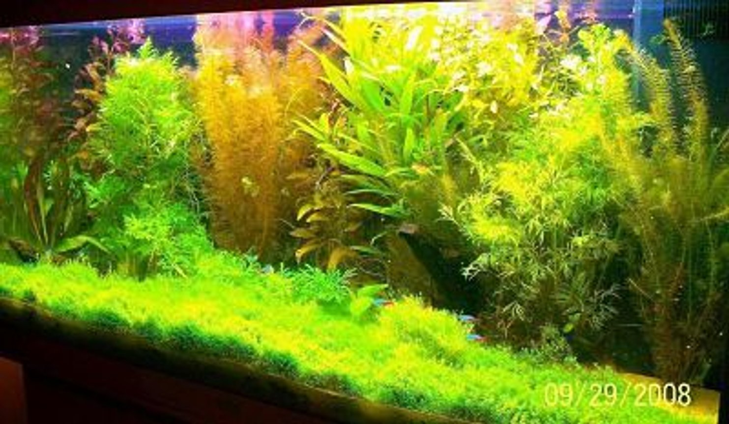 66 gallons planted tank (mostly live plants and fish) - juwel tank