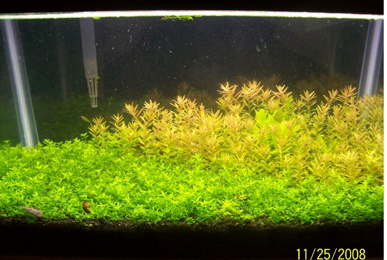 29 gallons planted tank (mostly live plants and fish) - get a planted 10 gal tank