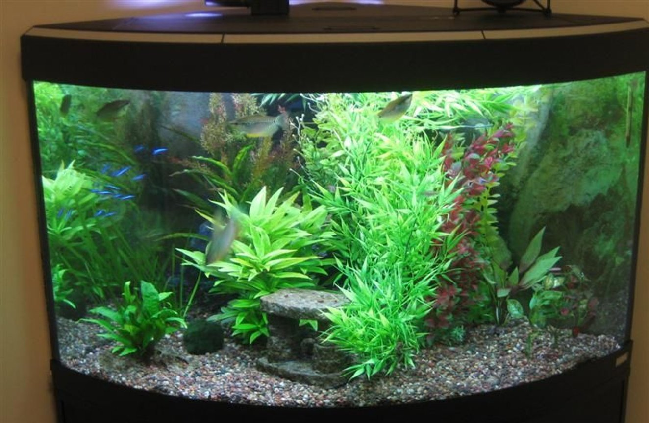 "55 gallons planted tank (mostly live plants and fish) - I have had this corner unit for about a year. Equipment includes a Fluval 205 canister filter, Aquaclear powerhead with quickfilter attachment and a heater. There is also a ""cave"" in the back corner (cannot be seen in the photo) which the gouramis/loaches use as a retreat."