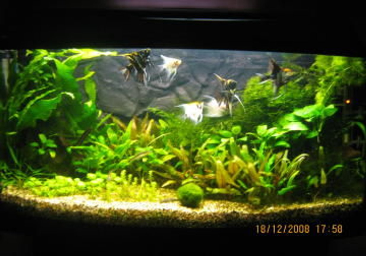 26 gallons planted tank (mostly live plants and fish) - The newest layout Low maintenance tank