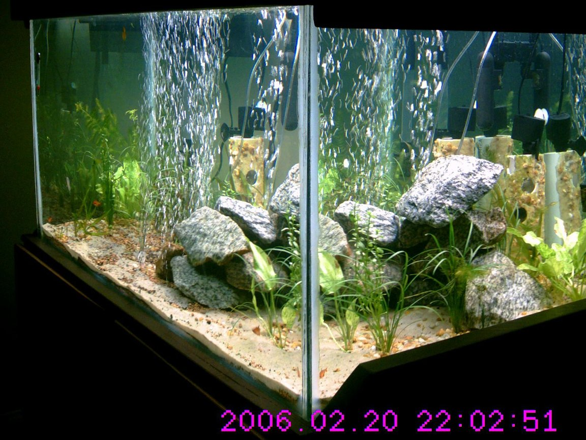 160 gallons planted tank (mostly live plants and fish) - 45 days in new plants added