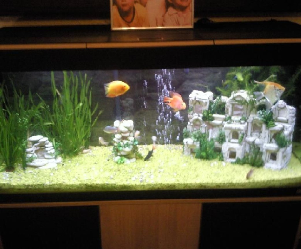 240 gallons planted tank (mostly live plants and fish) - duno wat to call it iv changed it so many times. needs alot more plants
