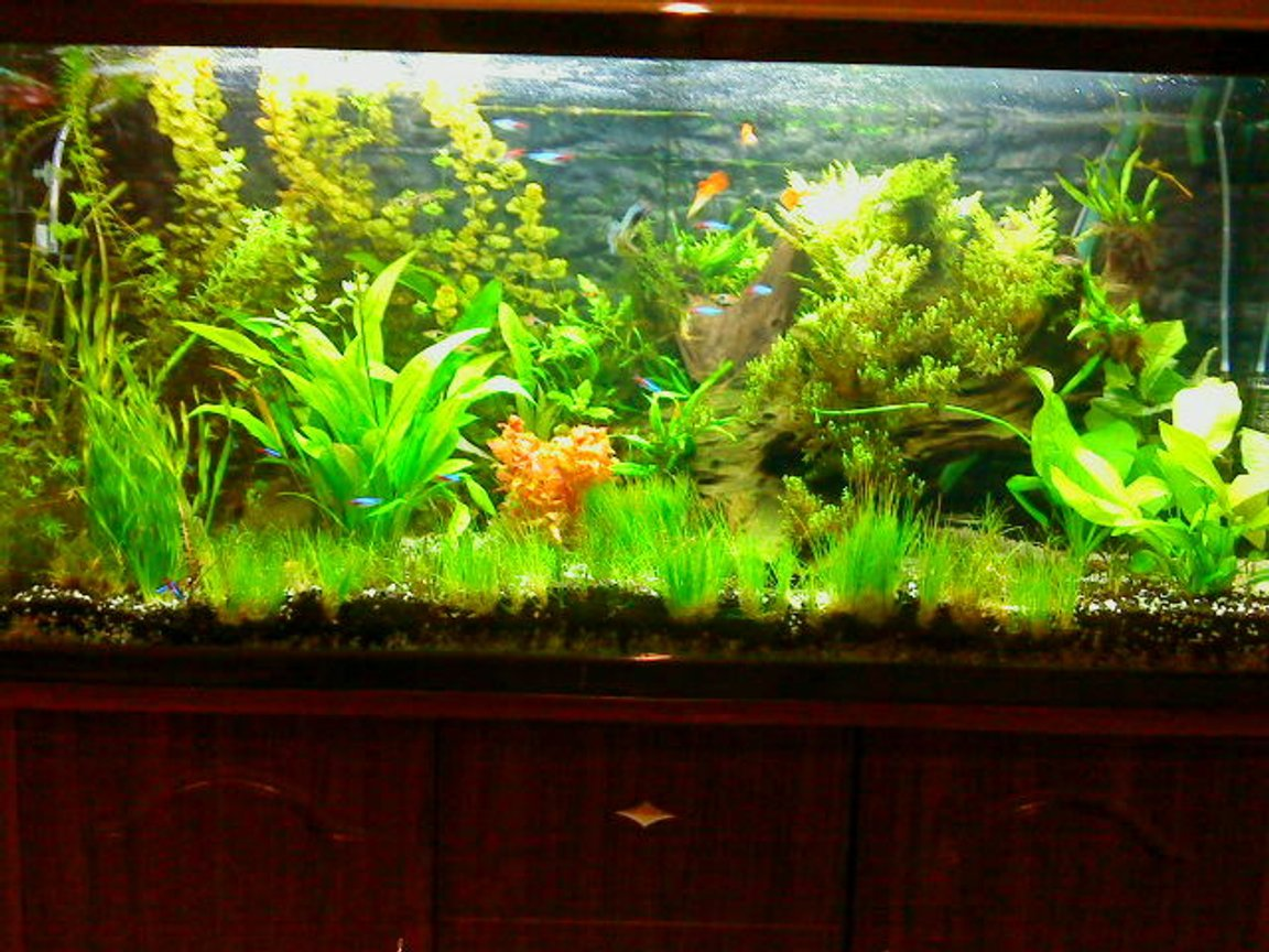 50 gallons planted tank (mostly live plants and fish) - update of my planted tank. trimmed and added some more plants