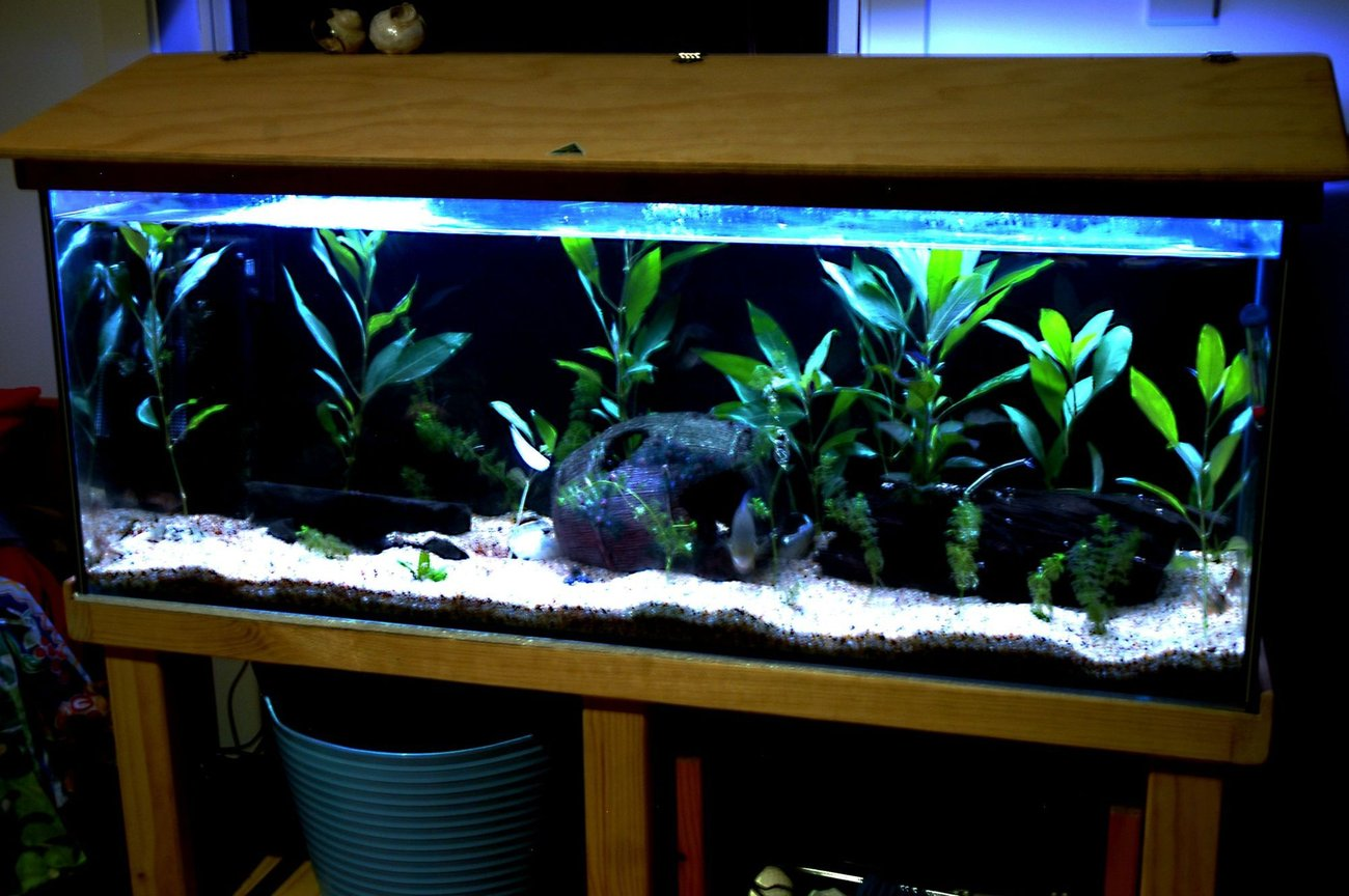 55 gallons planted tank (mostly live plants and fish) - 4 foot .... there isd more plants than when taken and plan on many more still.