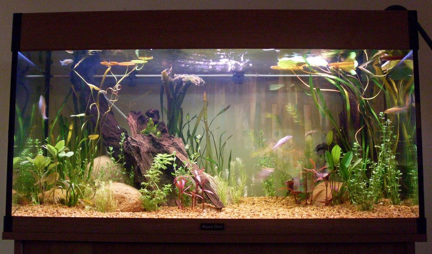 20 gallons planted tank (mostly live plants and fish) - The New Tank