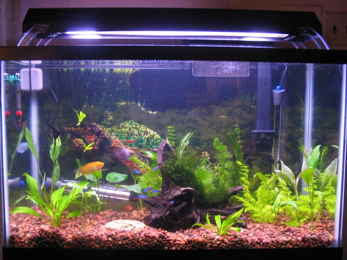 29 gallons planted tank (mostly live plants and fish) - 29 gal. tank w/ 20 fish, 4 shrimp, and 21 plants