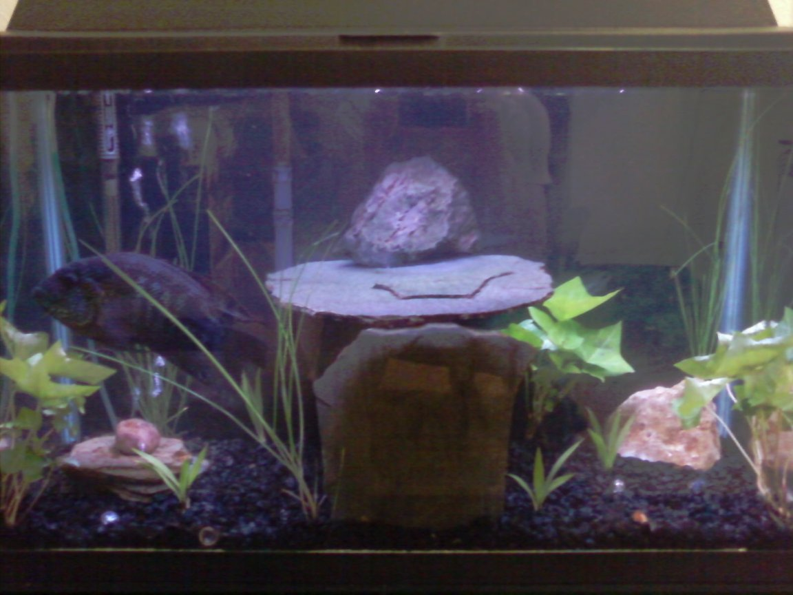 20 gallons planted tank (mostly live plants and fish) - freshwater cichlid tank with some plants from our garden. slate cave and custom bubbler.