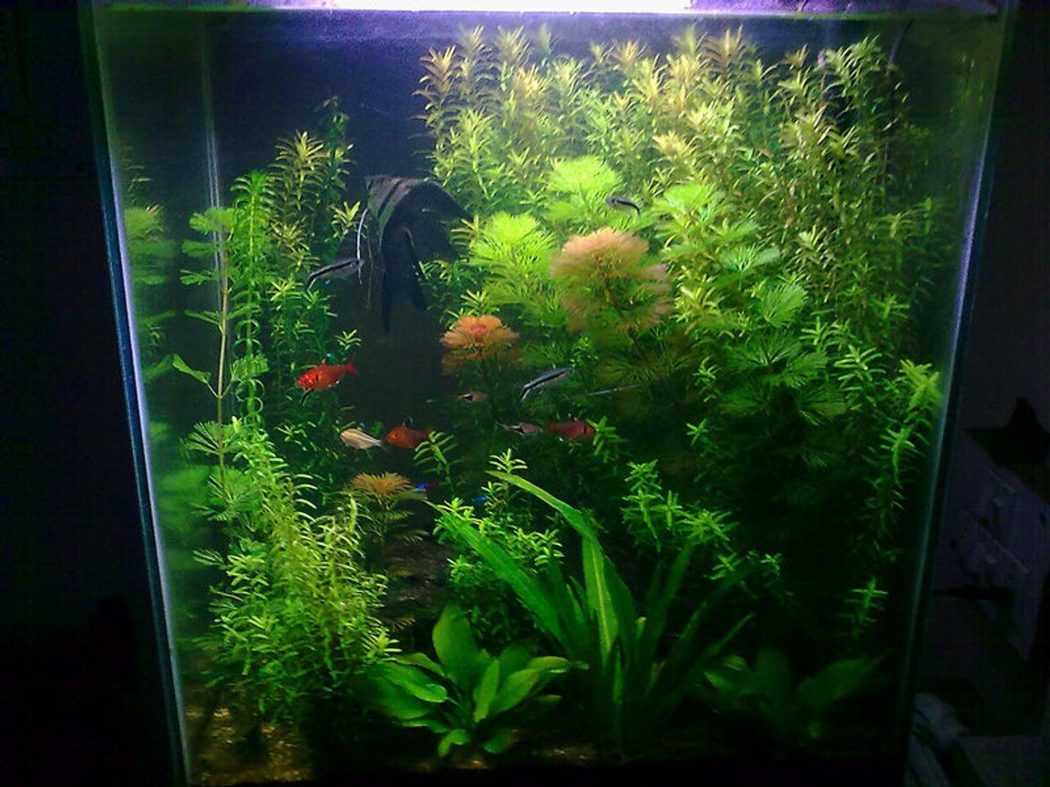 17 gallons planted tank (mostly live plants and fish) - overview