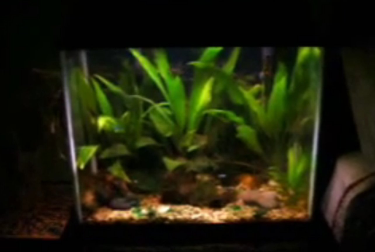 14 gallons planted tank (mostly live plants and fish) - planted tank 14 gallons