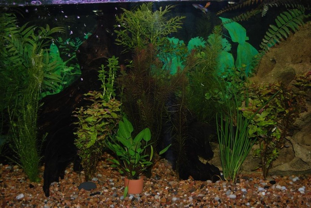 22 gallons planted tank (mostly live plants and fish) - This Is My Fish Tank.