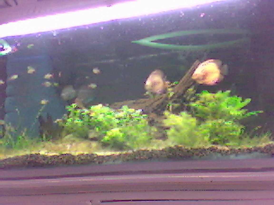 65 gallons planted tank (mostly live plants and fish) - ...