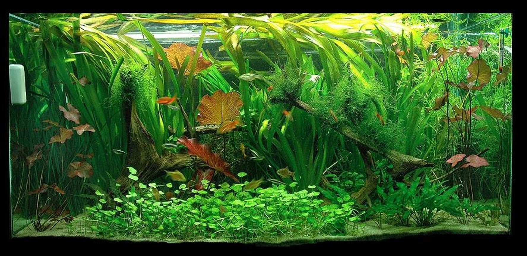 90 gallons planted tank (mostly live plants and fish) - 90g planted tank. CO2 and fertalizers, 2.4 wpg. Running 1 year.