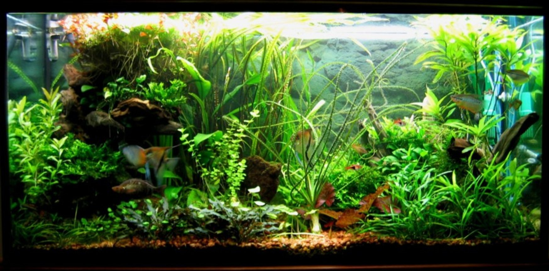 75 gallons planted tank (mostly live plants and fish) - The Jungle