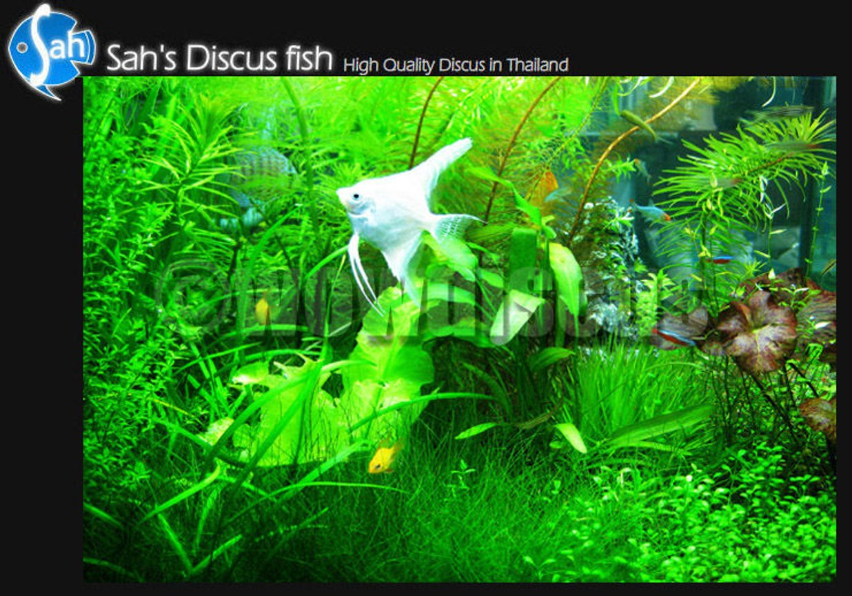 50 gallons planted tank (mostly live plants and fish) - I love it! wowaquarium at wowdiscus fish farm