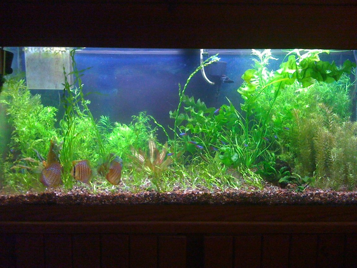 75 gallons planted tank (mostly live plants and fish) - Nov. 2009