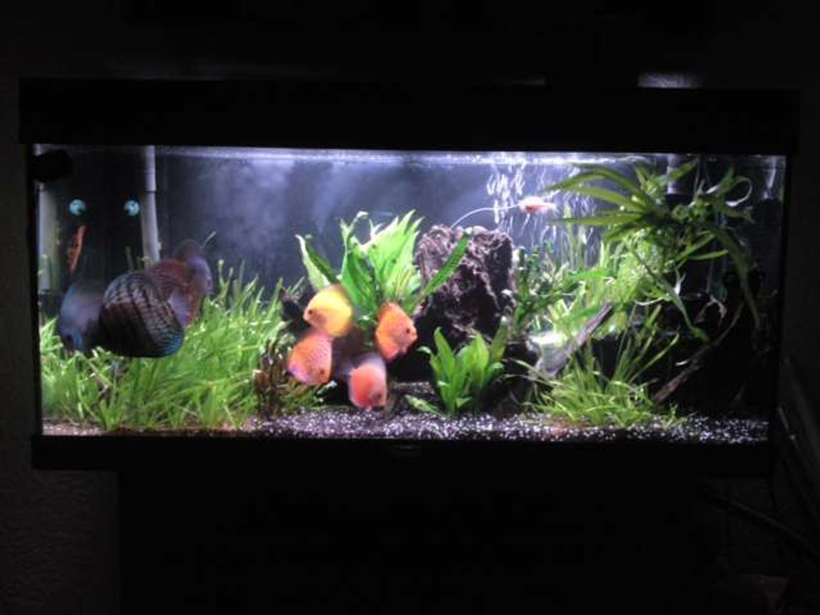 48 gallons planted tank (mostly live plants and fish) - main