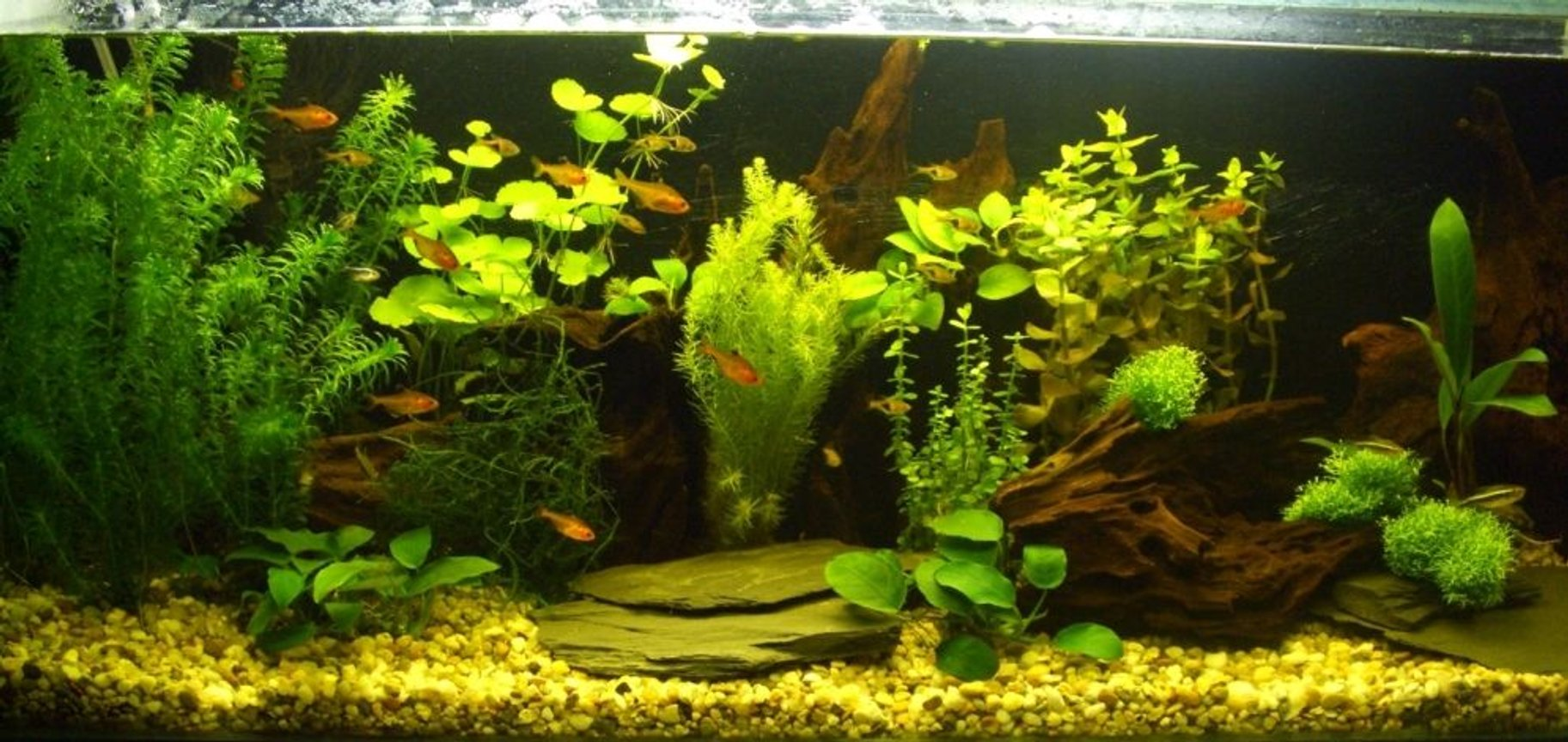 planted tank (mostly live plants and fish) - My new aquarium