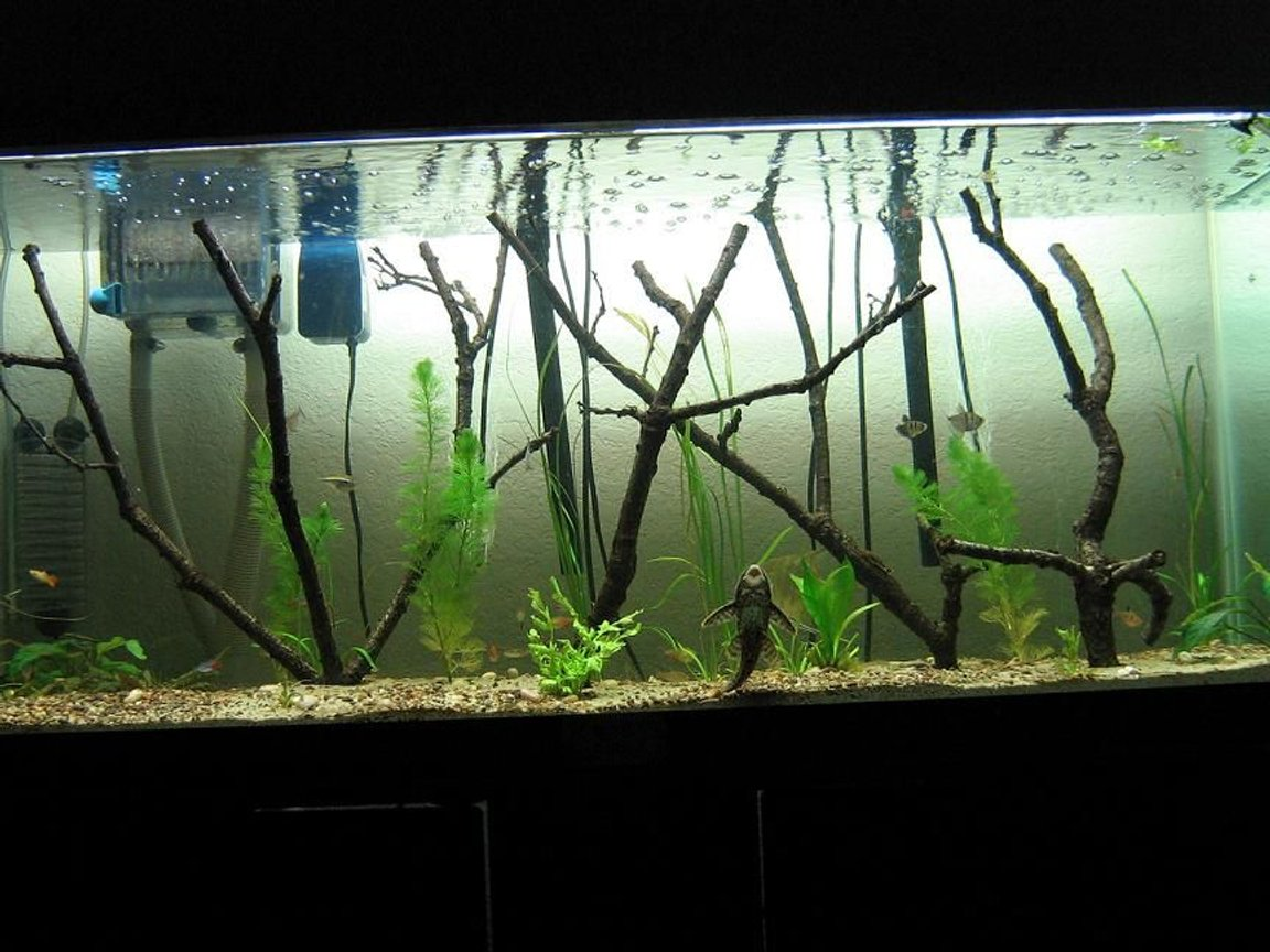 75 gallons planted tank (mostly live plants and fish) - flooded forest