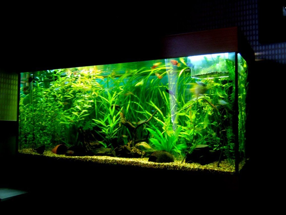 90 gallons planted tank (mostly live plants and fish) - Rio 180 planted tank