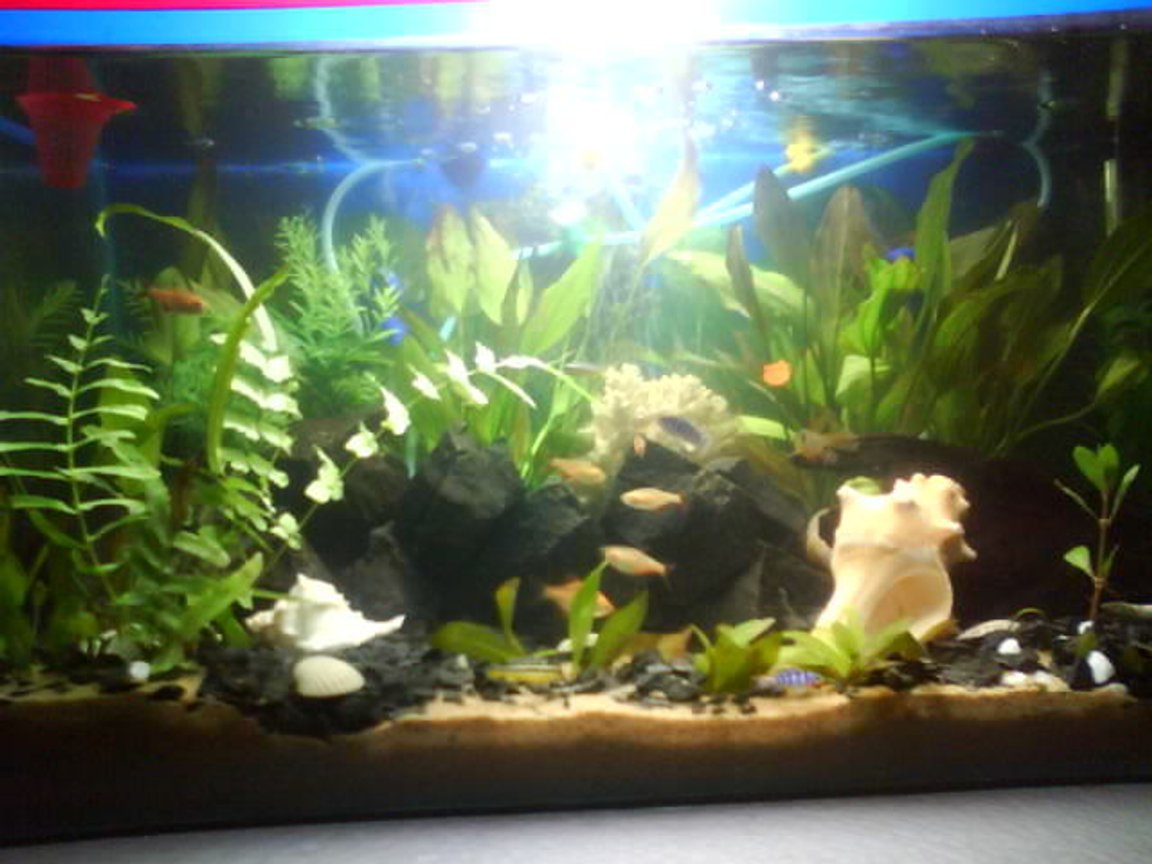 15 gallons planted tank (mostly live plants and fish) - SIMPLE PLANTED TANK...15 GALLON SIZE..