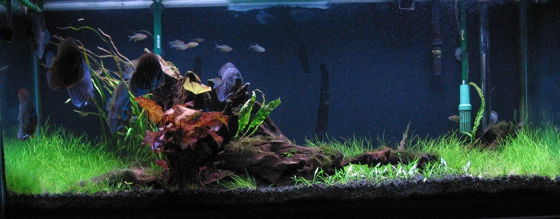 75 gallons planted tank (mostly live plants and fish) - Tank as of May 17, 2010. Still waiting for the java moss, crypt parva, balanse and crypt wendti to do their thing. Have had crypts before and they have always done well. This go round, I am experiencing rapid growth then rapid melt down.