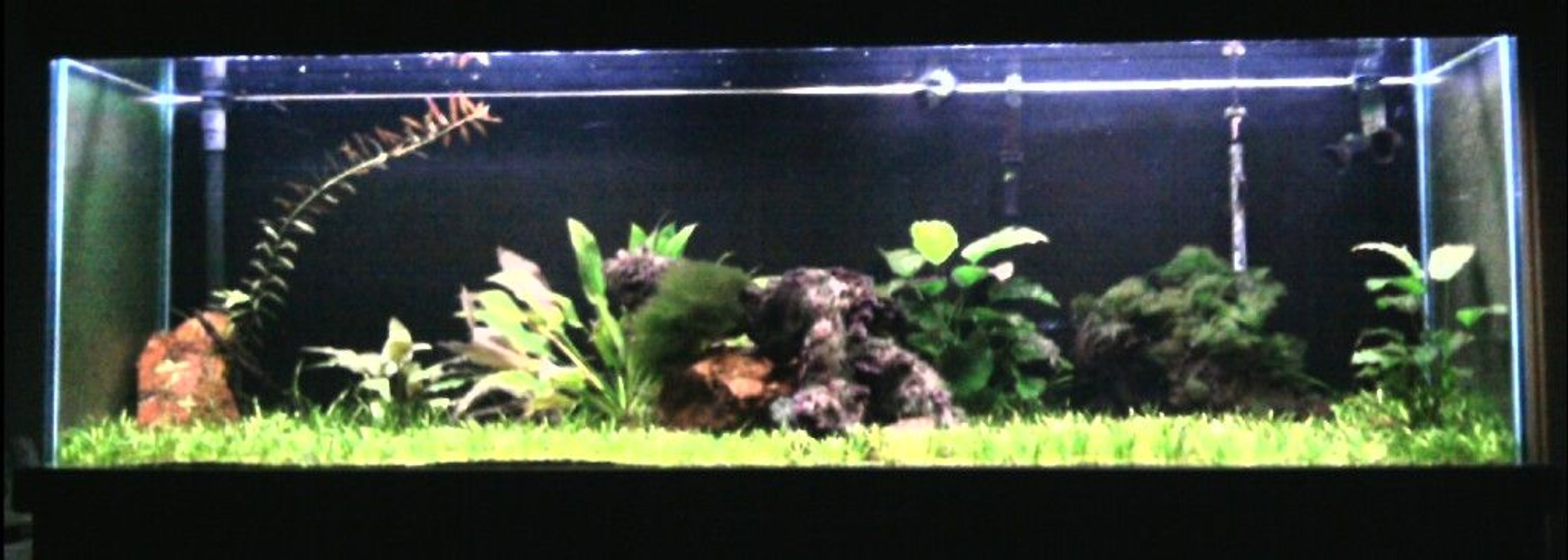 125 gallons planted tank (mostly live plants and fish) - 125gal. 9-month old planted tank