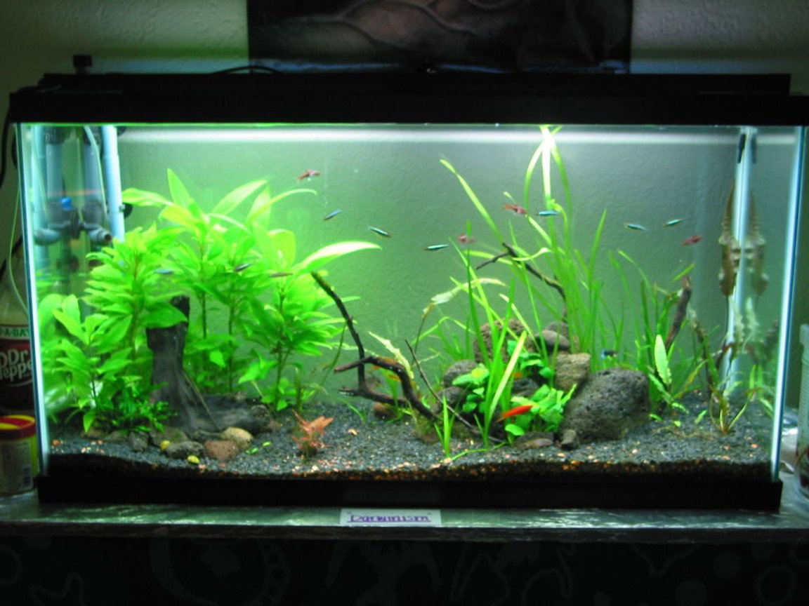 10 gallons planted tank (mostly live plants and fish) - 38 Gallon Planted Tank