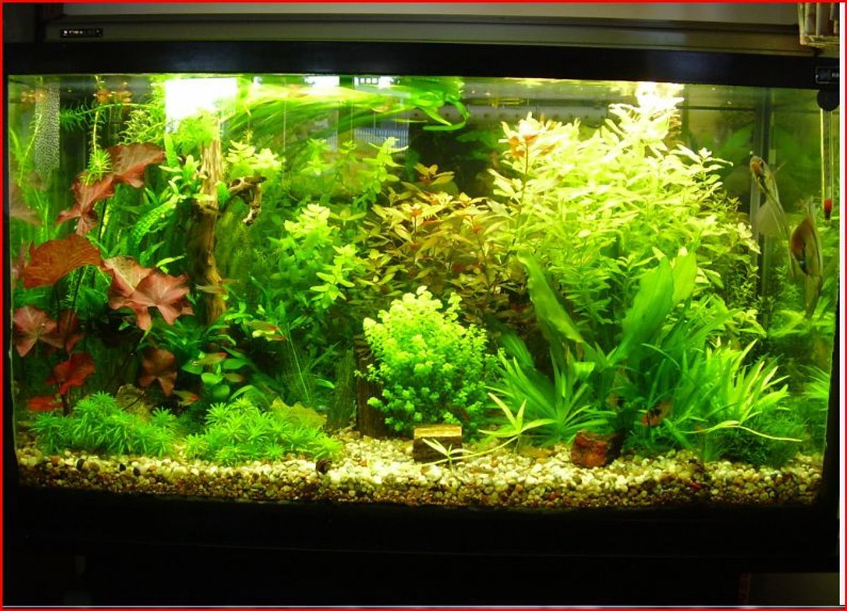 50 gallons planted tank (mostly live plants and fish) - just another pic