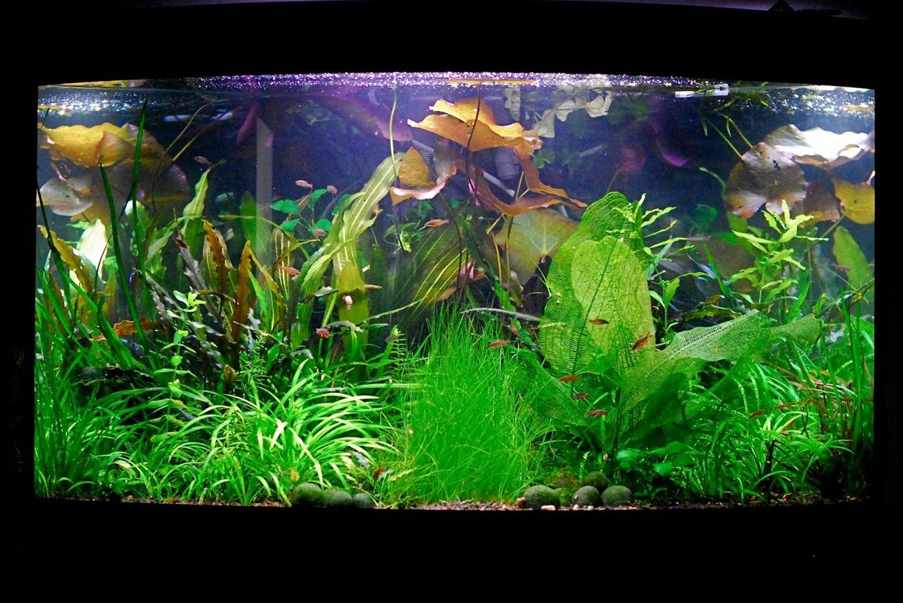 50 gallons planted tank (mostly live plants and fish) - June 2010.. ever changing:)