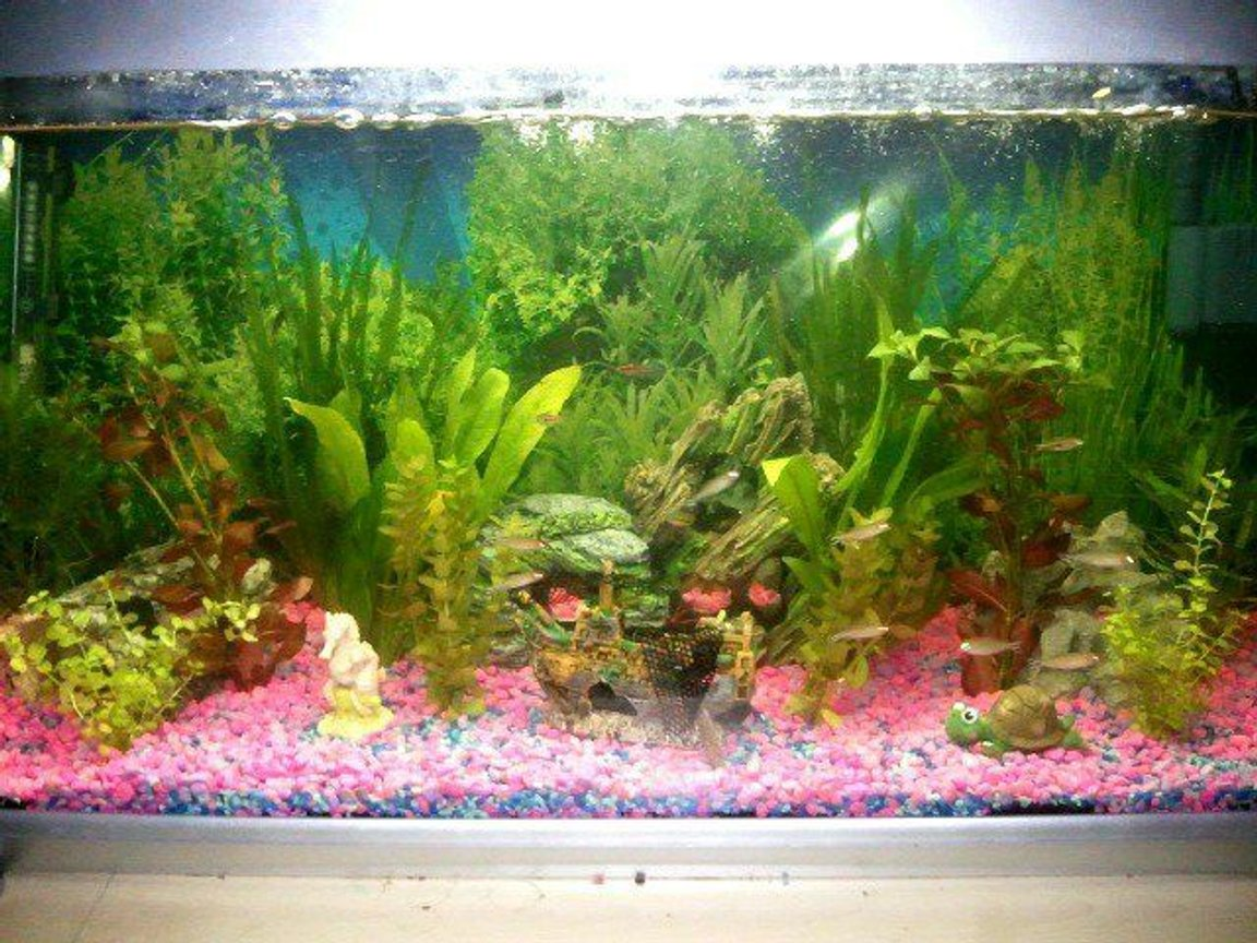 48 gallons planted tank (mostly live plants and fish) - My Older tank, still with my many fish in it, this tank was more a fun tank than my newer one :)