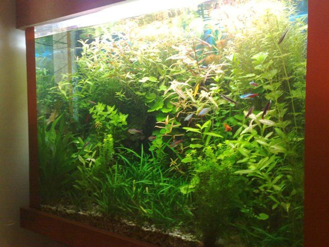 125 gallons planted tank (mostly live plants and fish) - Full View