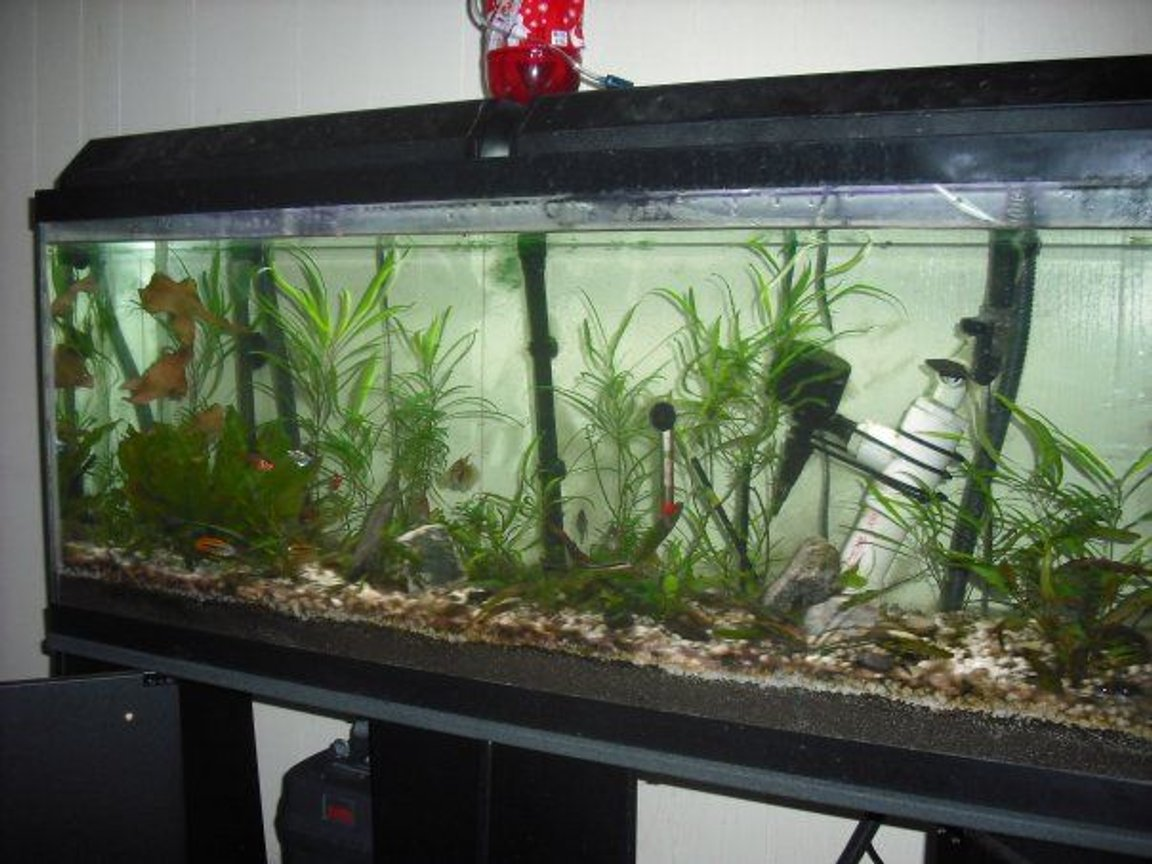 55 gallons planted tank (mostly live plants and fish) - 55 gallon planted tank