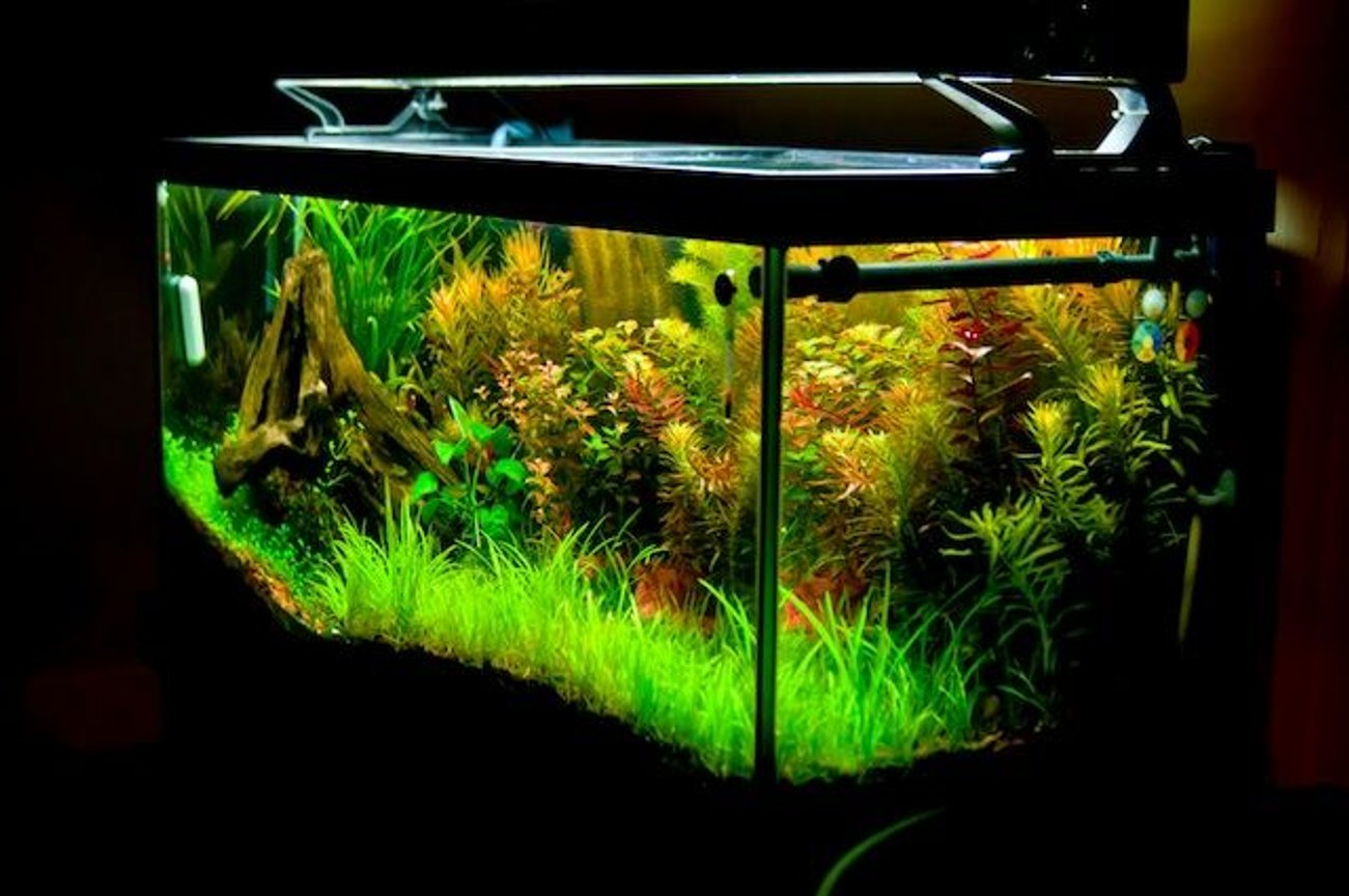 75 gallons planted tank (mostly live plants and fish) - 2011 planted tank