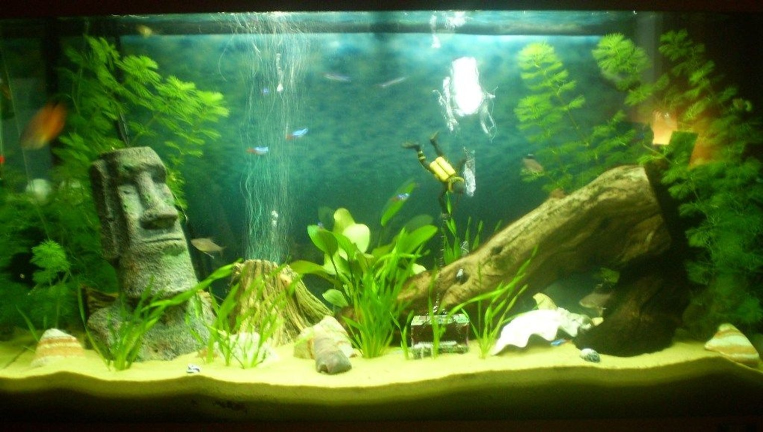 33 gallons planted tank (mostly live plants and fish) - juwel 125 planted in progress