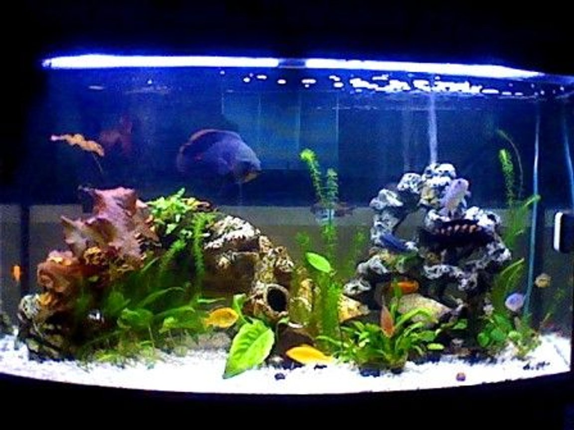 47 gallons planted tank (mostly live plants and fish) - 47gallon mostly cichlids. if anyone has any advice they would like to give me please feel free to comment Sorry for the low quality pictures