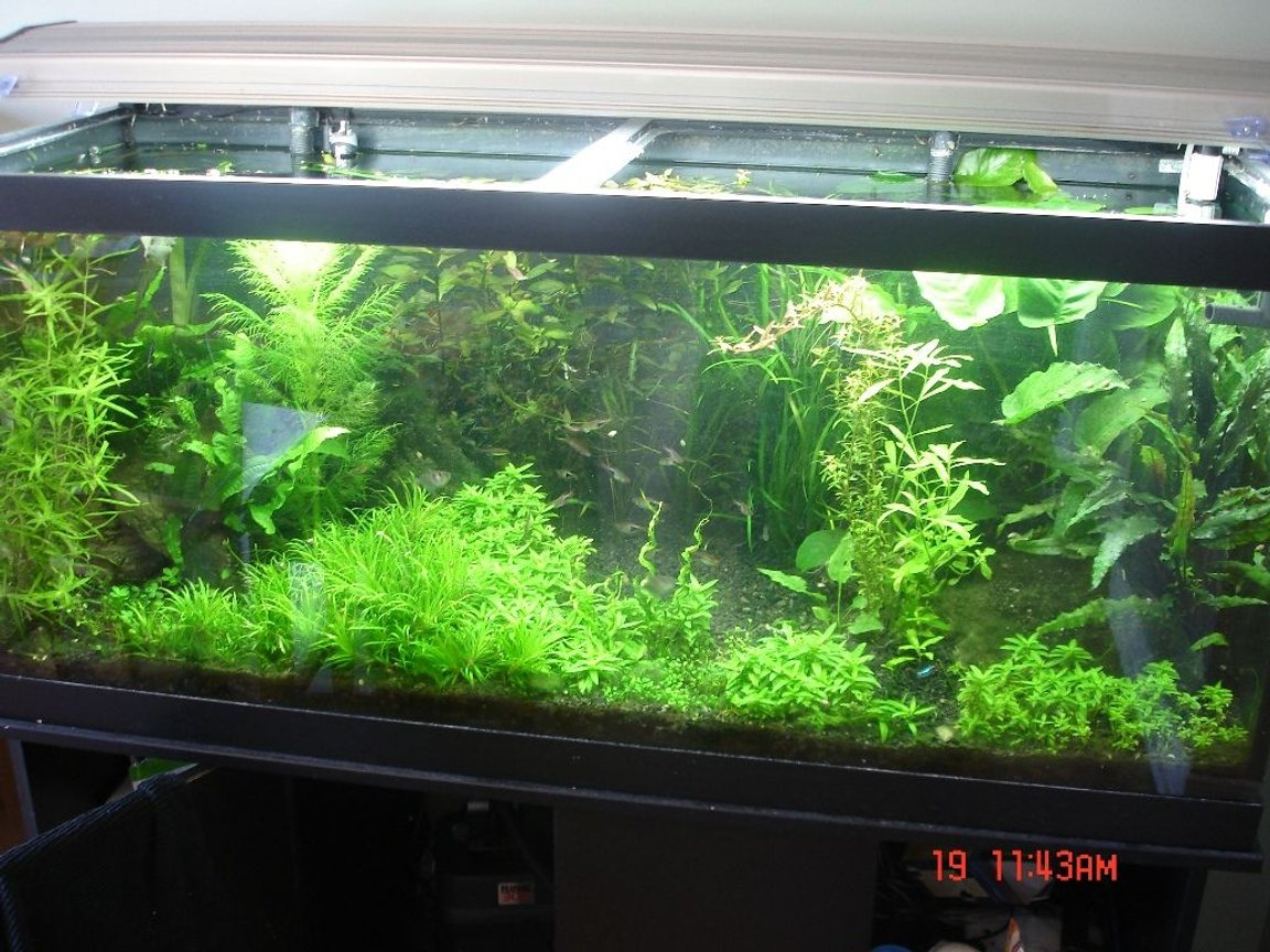 75 gallons planted tank (mostly live plants and fish) - More recent pic with open area and alternate ground cover plants.