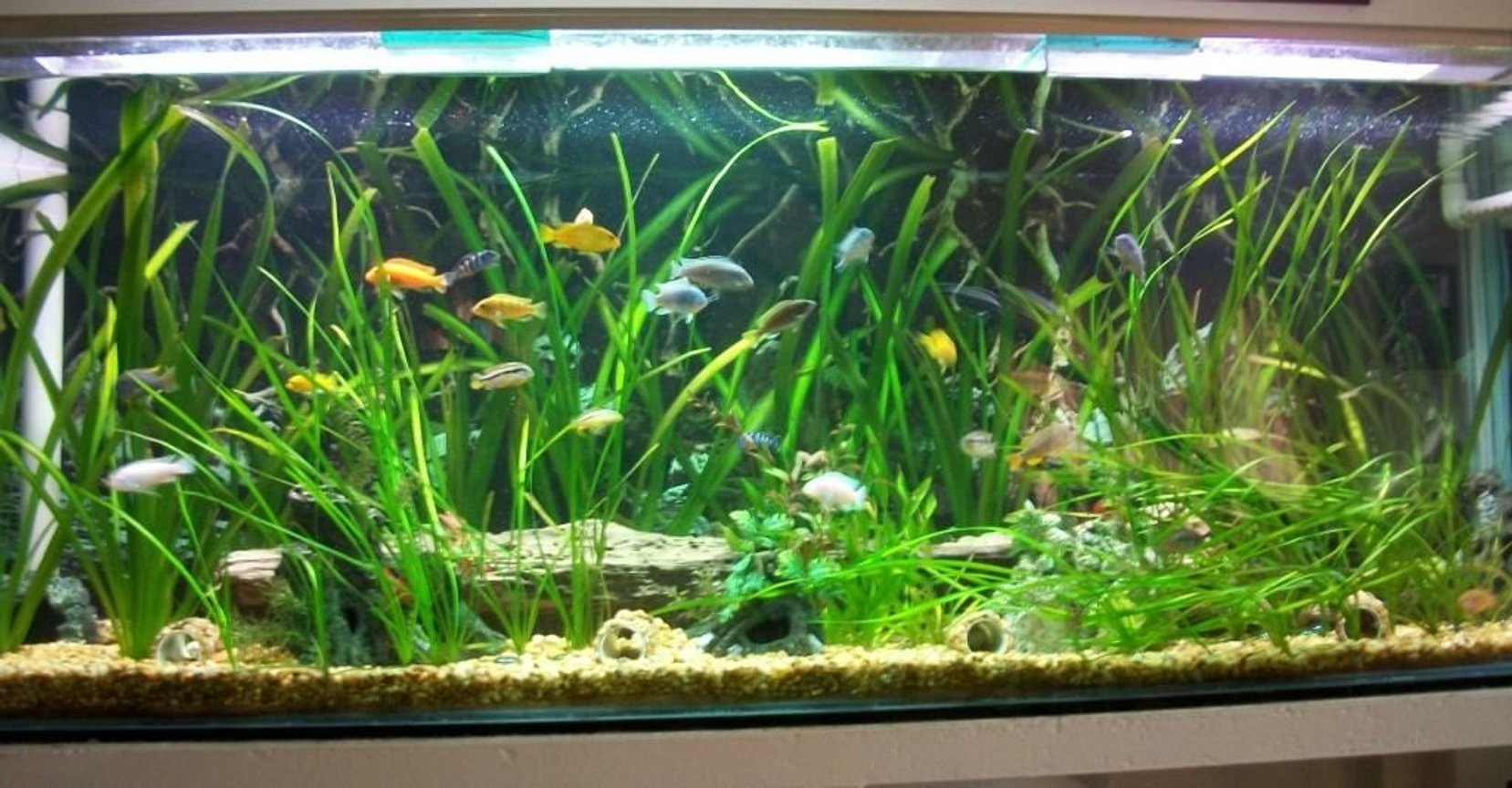 180 gallons planted tank (mostly live plants and fish) - front view