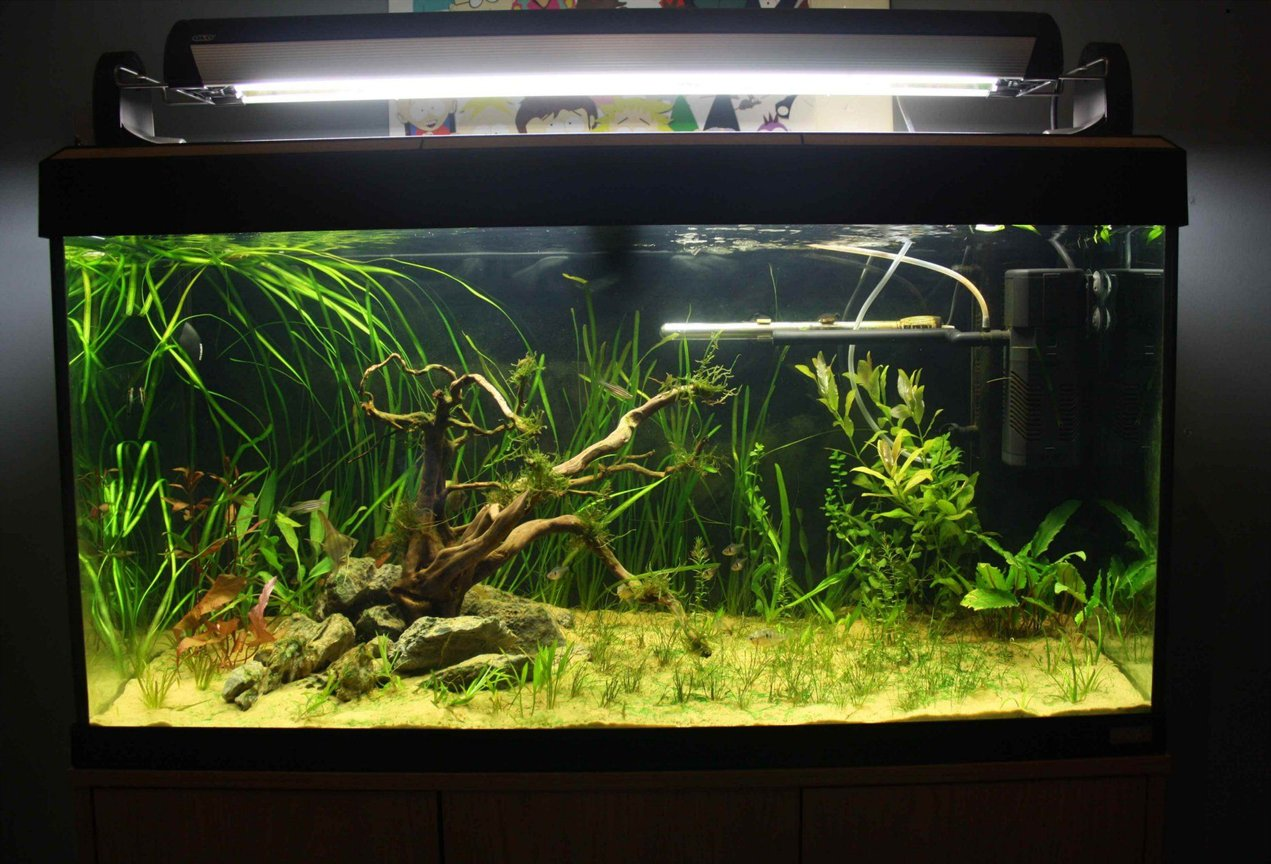 55 gallons planted tank (mostly live plants and fish) - roma..200