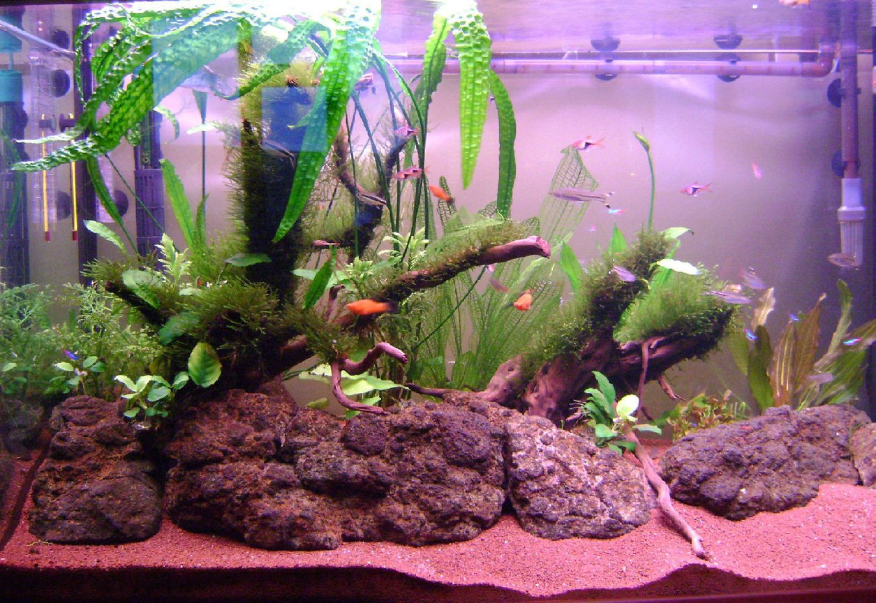 65 gallons planted tank (mostly live plants and fish) - Last pic taken on May 19, 2011
