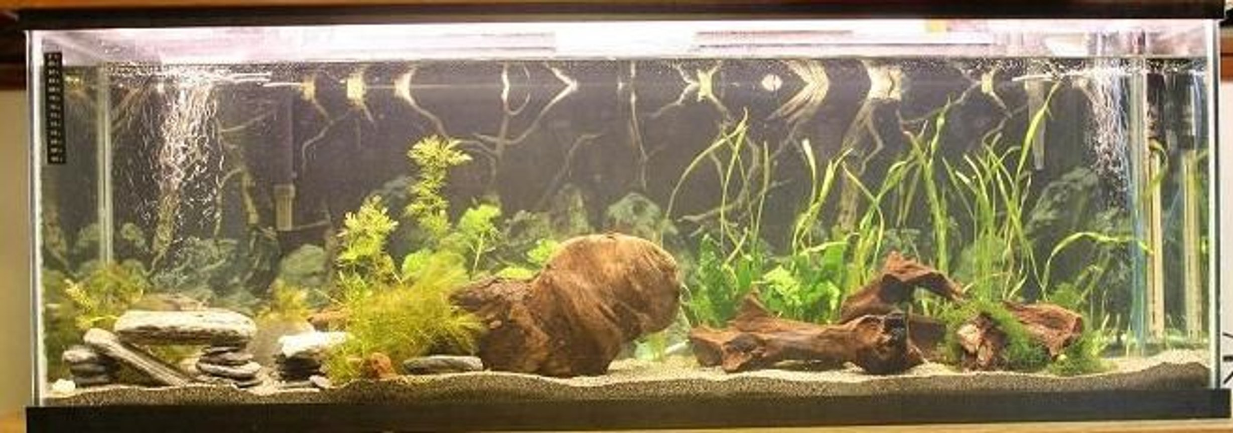 45 gallons planted tank (mostly live plants and fish) - New setup