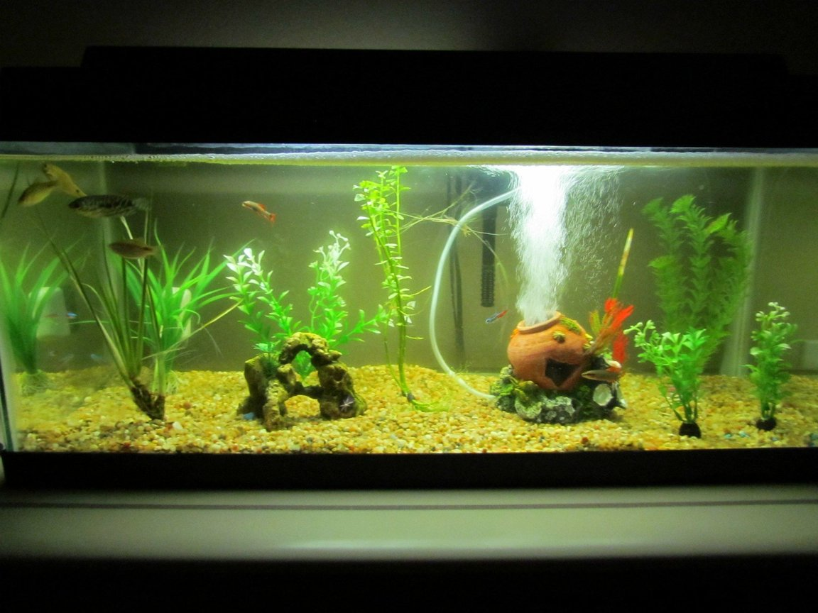 20 gallons planted tank (mostly live plants and fish) - my tank is a 20 gallon long..i love it..i have 2 live plants and getting some live driftwood