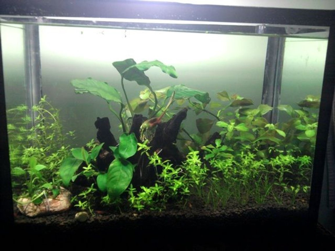 5 gallons planted tank (mostly live plants and fish) - Size:-W14 x D8.5xH 10 inch Light:-23 watt CFL Co2:- DIY Co2 Substrate:- ADA Plants:- Anubias nana,Anubias coffefolia,Anubias barteri,Anubias afzeli,ludwigiaRepens,Hair grass,Hemianthus micranthemoides Invertebrates:-shrimps and nerite snails