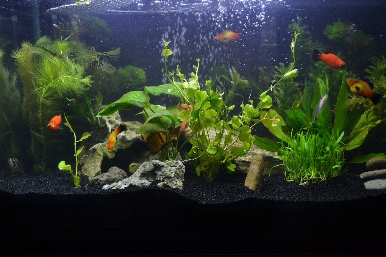 10 gallons planted tank (mostly live plants and fish) - 10g planted tank