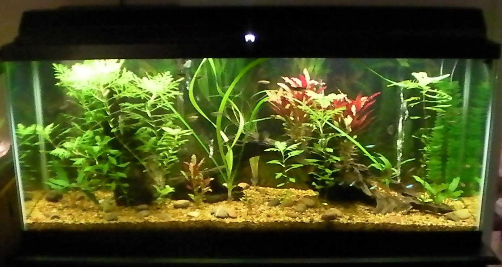 55 gallons planted tank (mostly live plants and fish) - most recent