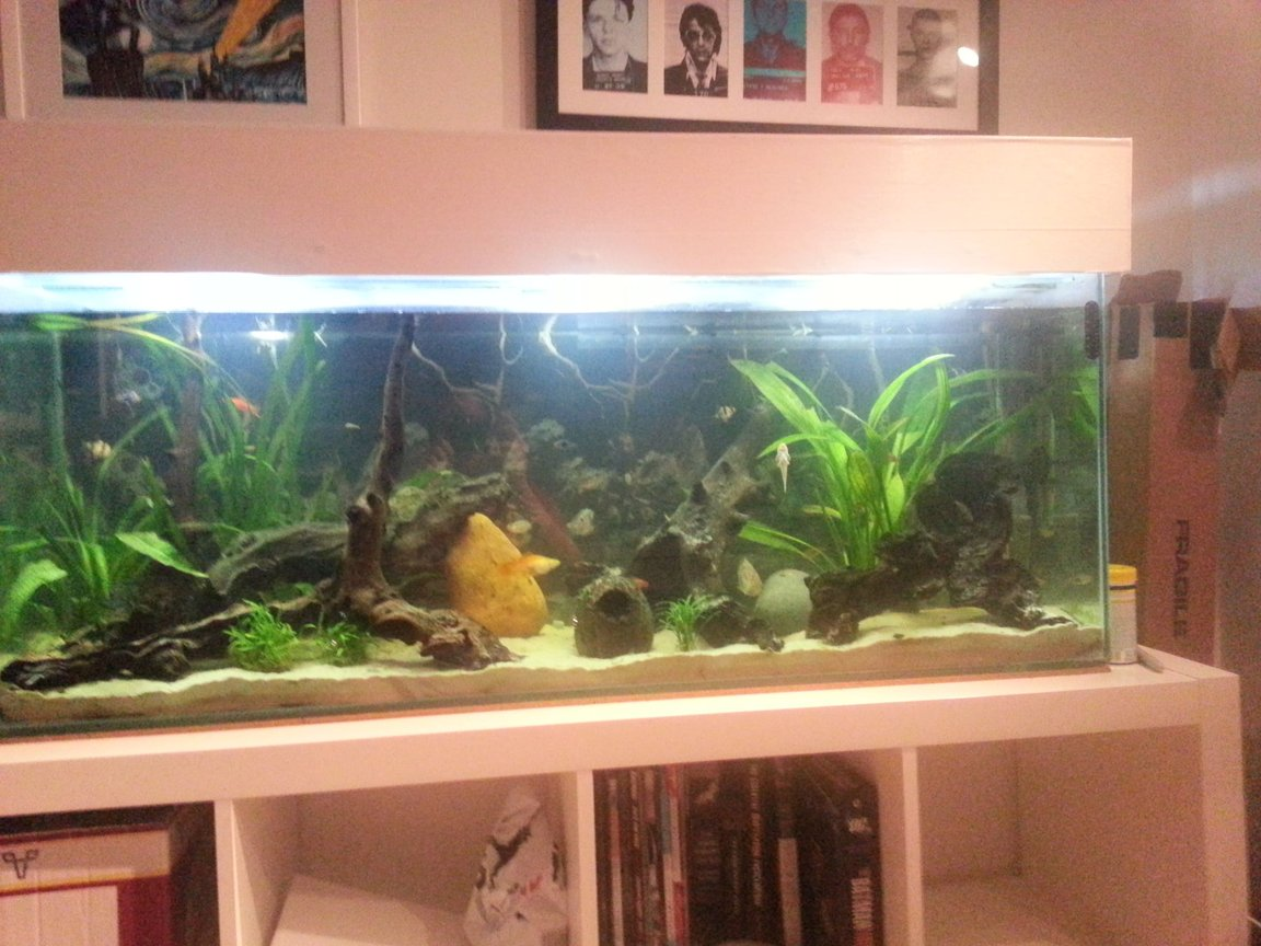50 gallons planted tank (mostly live plants and fish) - 4ft natural river bed tank