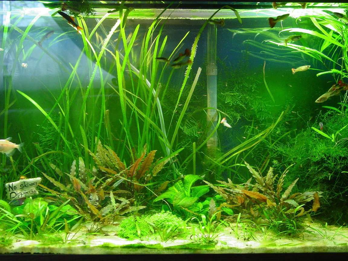 30 gallons planted tank (mostly live plants and fish) - 30 Gallon family tank