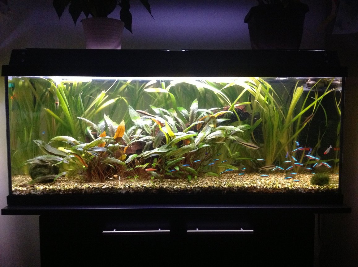 30 gallons planted tank (mostly live plants and fish) - My fish tank