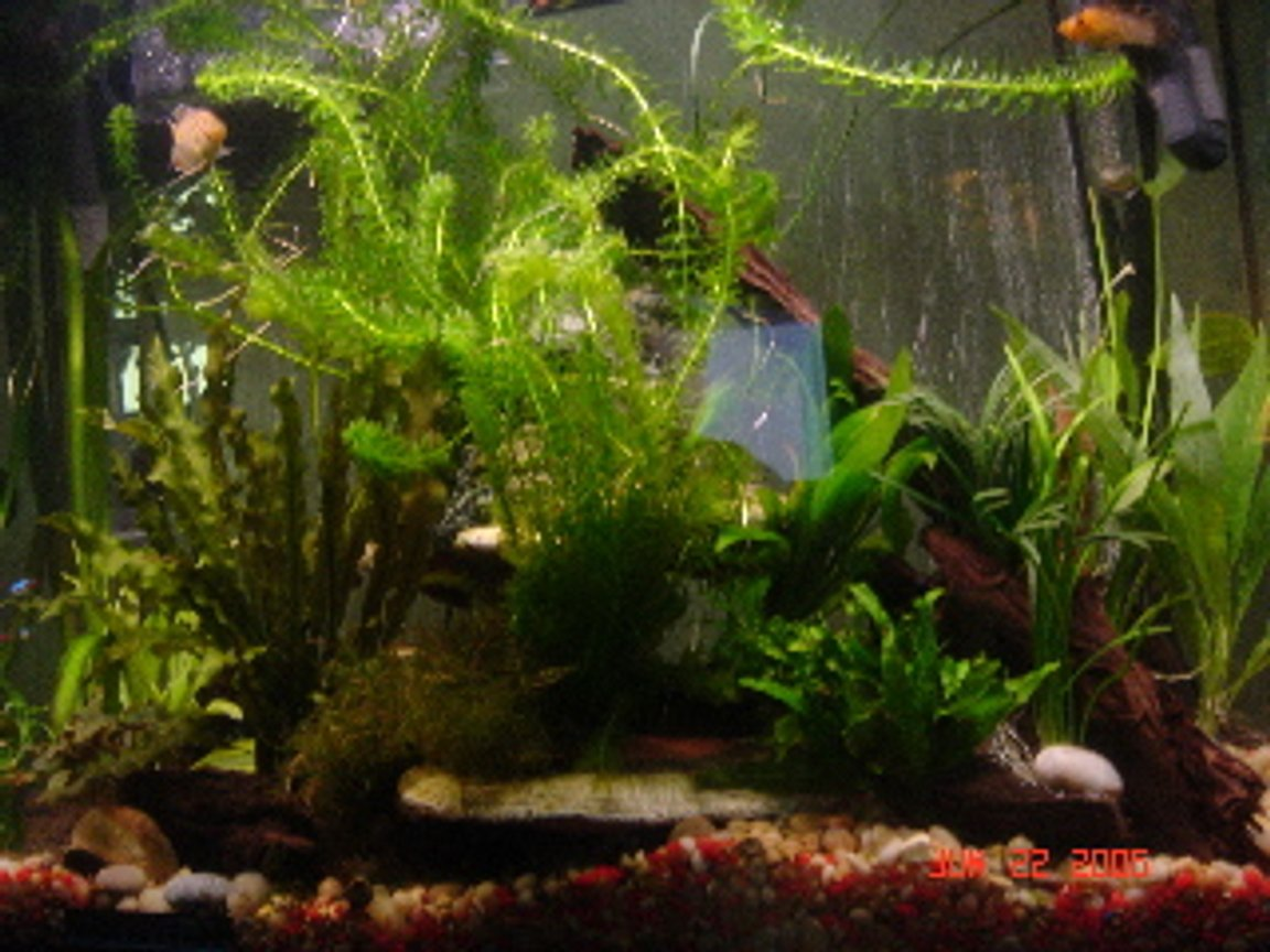 50 gallons planted tank (mostly live plants and fish) - 40G Planted Tank