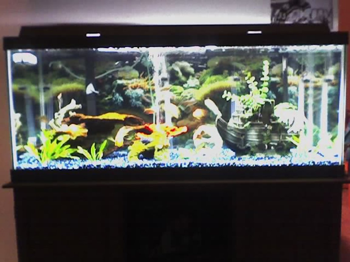 75 gallons planted tank (mostly live plants and fish) - mine for your viewing