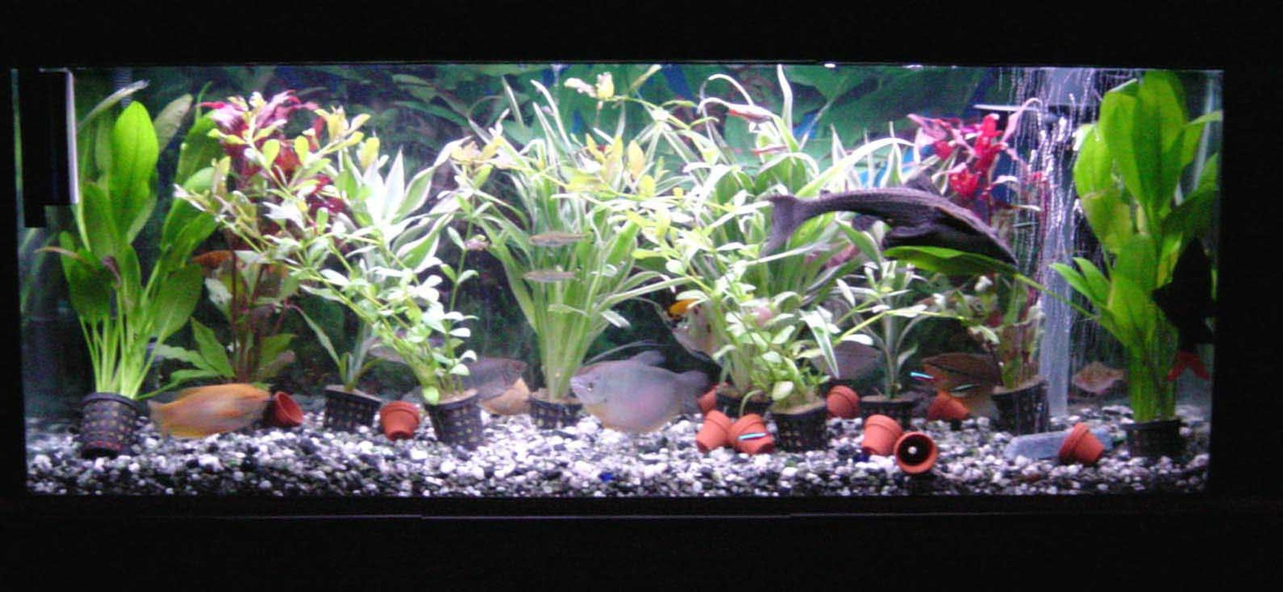 "30 gallons planted tank (mostly live plants and fish) - it is a jewel 120 with 10 plants, an under gravel filter with powerhead for water flow. fluval 304 and air pump for air birck. has about 40 fish, sissor tails, moonlight garami, black neons, cardinals , 9"" plec, a yellow and white angel and alot more. t8 lighting Aqua glow single 30"" tube"